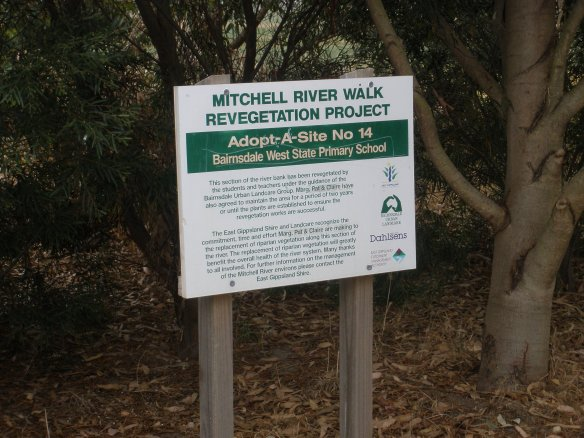 river bank revegetation