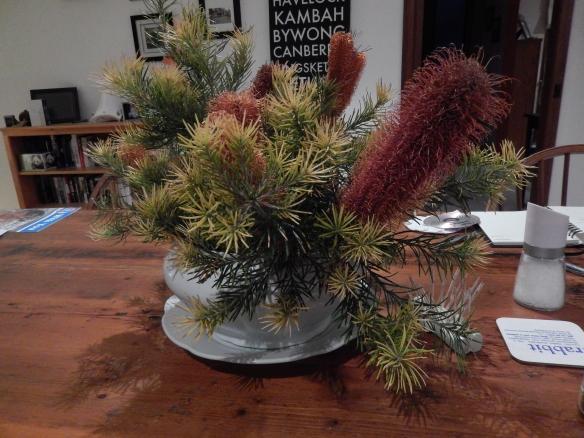 banksia blooms