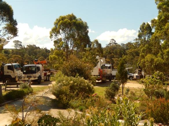 gathering of trucks