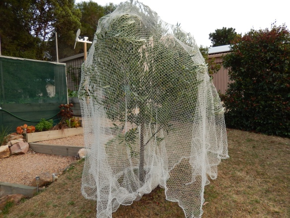 tree net covered