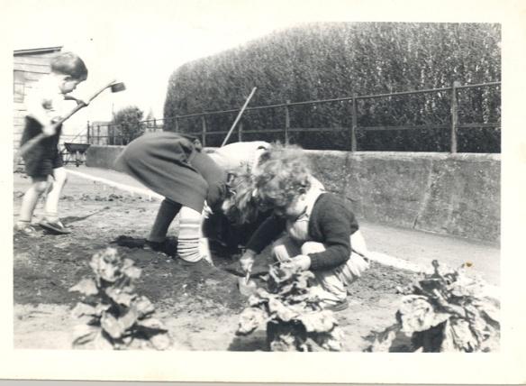 Gardening Bonavista T