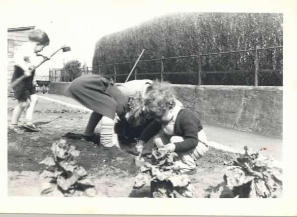 Gardening Bonavista