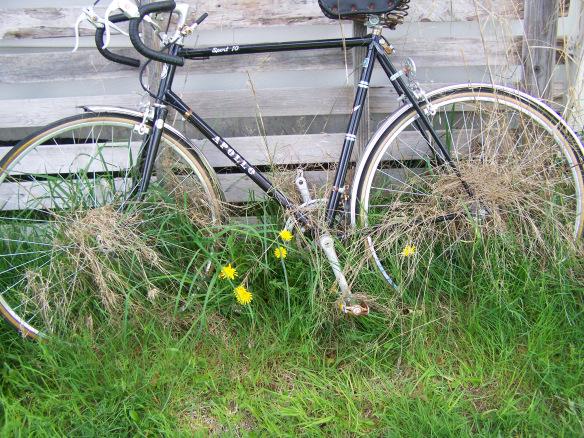 neglected bike
