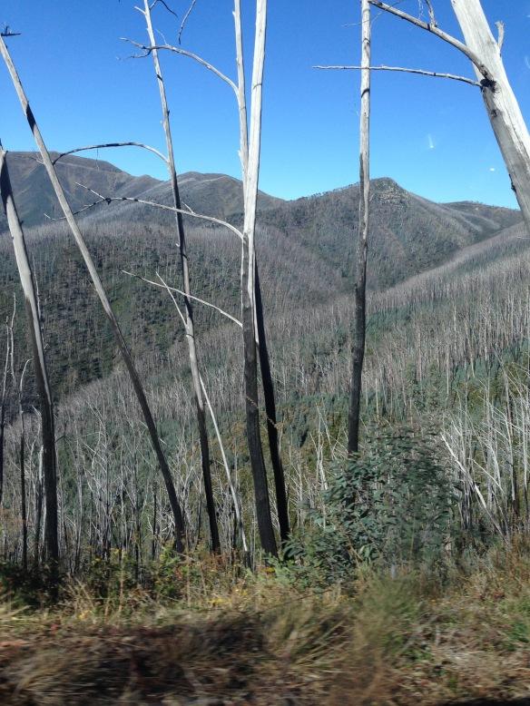 remants of bushfire scarred vegetation