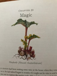 Inofrmative illustration at each chapter heading.